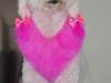 Pinkben